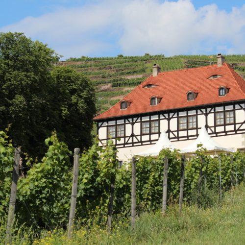 Hoflößnitz in den Weinbergen